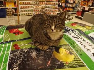 cat (640x480)